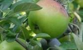 Di Bandung, Botol Plastik Bisa Ditukar Apel