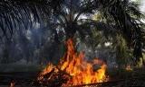 Api membara akibat pembakaran pelepah di lahan milik warga di Kecamatan Tapung, Kabupaten Kampar, Riau, Senin (24/6). Presiden Susilo Bambang Yudhoyono meminta semua pihak menghentikan pembakaran lahan yang bisa mengakibatkan kebakaran, dan meminta maaf at