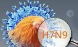 Flu Burung jenis H7N9.