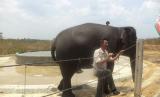 Gajah bersama pawangnya di Taman Nasional Way Kambas.