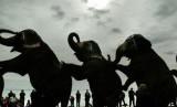 Gajah Sirkus. Ilustrasi.