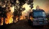 Kebakaran hutan terbaru di Australia