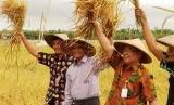 Panen padi di Demak, Jawa Tengah.