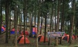 Forest conservation (dok.Pushumas Kemenhut)