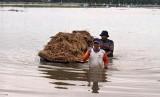 Petani membawa padi mereka yang terendam banjir di area persawahan Desa Nga, Kabupaten Aceh Utara, Aceh, Ahad (3/11).