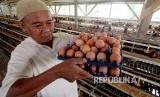 Peternak memanen telur ayam yang siap dijual di kawasan Cibinong, Bogor, Jawa Barat, Kamis (12/7).  Harga jual telur di tingkat konsumen dan sejumlah pasar tradisional naik, dari Rp23.000 per kilogram  menjadi Rp30. 000 karena naiknya harga pakan ternak serta minimnya bibit ayam petelur.