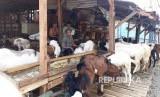 Peternakan kambing milik warga (ilustrasi)