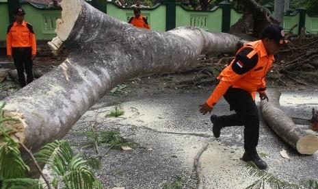 Ribuan Pohon di Bekasi Rawan Tumbang