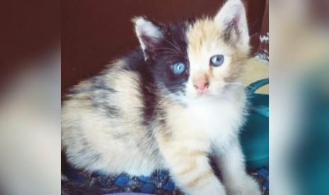 8 Manfaat Memelihara Kucing Republika Online