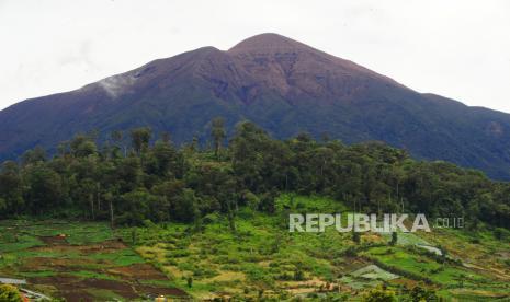 Polda Sumbar Ungkap Perusakan Taman Nasional Kerinci Seblat thumbnail