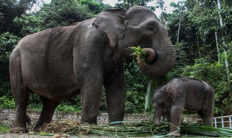 Anak Gajah Sumatra Ditemukan Mati di Aceh thumbnail