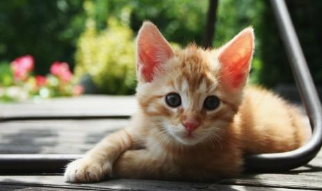 44+ Gambar Kerangka Hewan Kucing HD