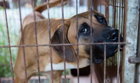 Anjing Ini Setia Tunggu Pemiliknya yang Wafat 3 Bulan Lalu