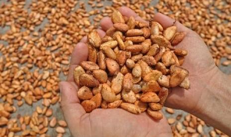 tandai sistem perdagangan eksport coklat