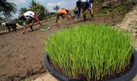 Baznas Kembangkan Lumbung Padi Organik di Sukabumi