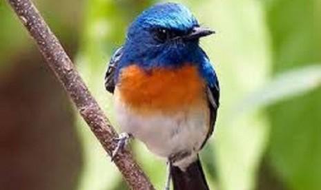 Karantina Pertanian Gagalkan Penyelundupan Ribuan Burung thumbnail