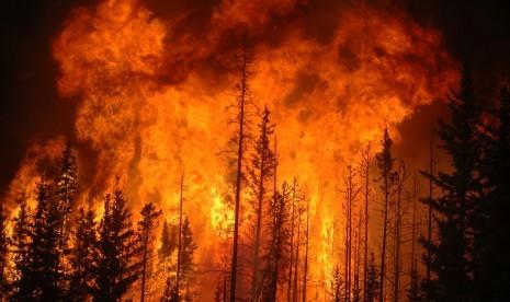 Kebakaran Hutan di Queensland Picu Gelombang Panas