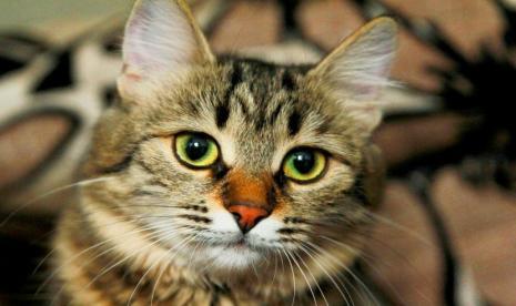 Kisah Rasulullah Saw Yang Sangat Sayang Kucing Republika Online