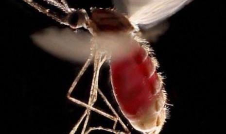 Lombok Barat Belum Cabut Status KLB Malaria