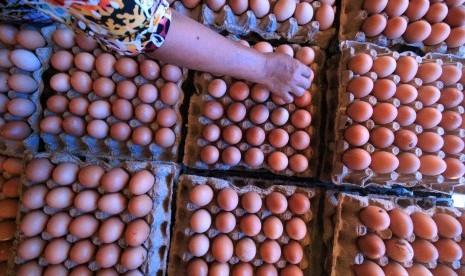 Pedagang: Sudah Dua Pekan Harga Telur Ayam Naik