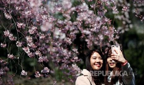 72+ Gambar Mozaik Bunga Sakura Terlihat Keren