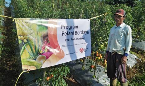 Petani Berdaya Cireundeu Siap Panen Tomat