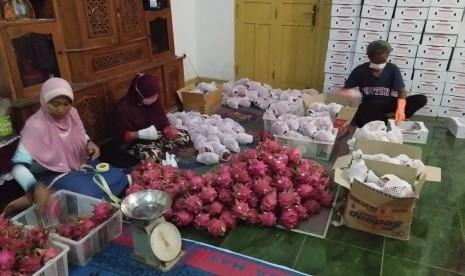 Kementan Gandeng Investor Serap Buah Naga Petani Banyuwangi