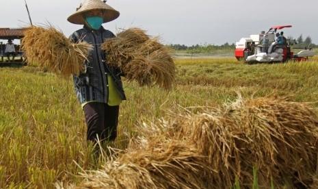 Bulog Siap Serap Beras Hasil Produksi Petani di Awal 2019