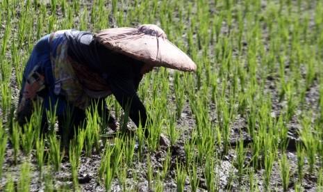 Program Bekerja Kementan Kurangi Penduduk Miskin Perdesaan