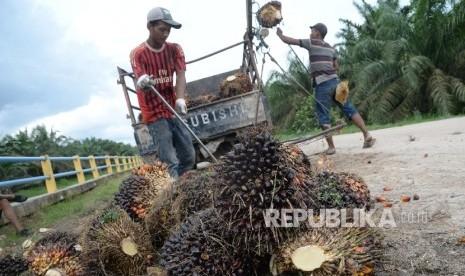 Petani Sawit Harus Berani Replanting