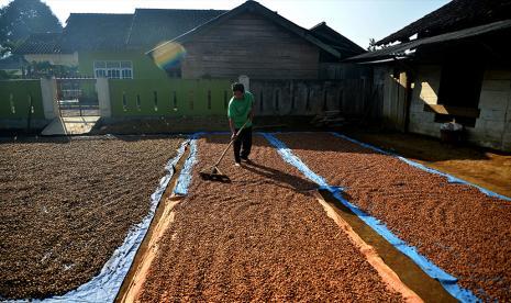 Pemprov Lampung Revitalisasi 1.000 Hektare Tanaman Kopi thumbnail