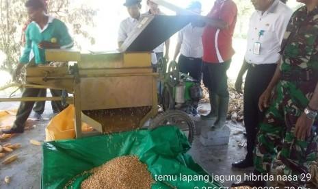 KP Makariki Maluku Optimal Tanam Jagung Hibrida NASA 29