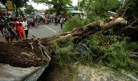 Pohon Tumbang Rusak Rumah dan Ruko di Sukabumi