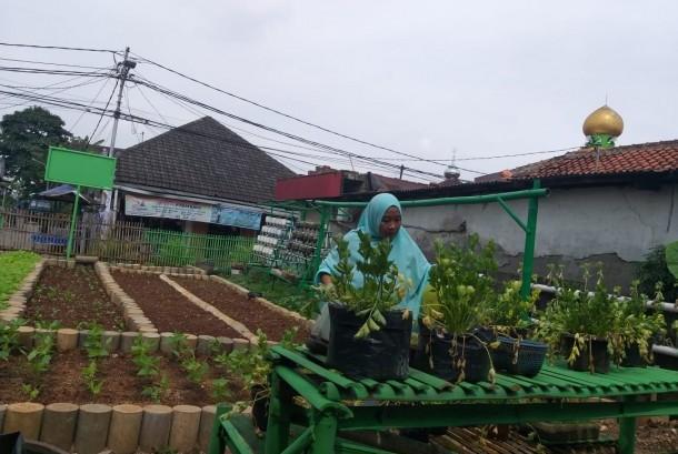 Manfaatkan Lahan Sempit Jadi Kebun Sayur | Republika Online