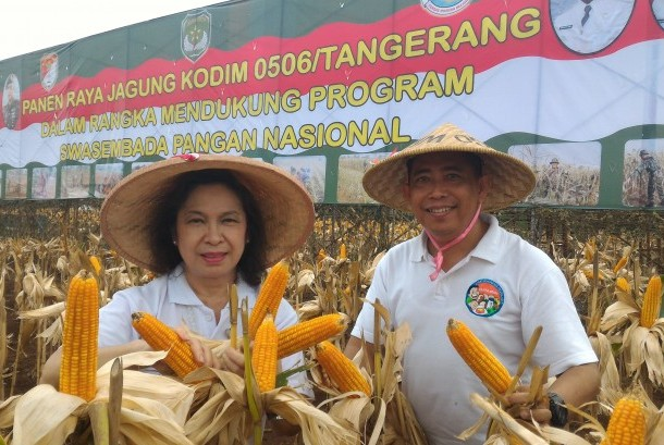 Panen raya jagung hasil kerja sama petani dan TNI AD di Jalan Rawa Kutuk Kelurahan Pondok Jagung Timur, Kecamatan Serpong Utara, Tangerang Selatan, Sabtu lalu (14/5).