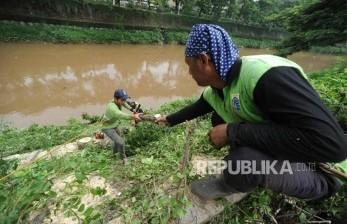 Jakpus Rutin Pangkas Pohon Antisipasi Tumbang ke Jalan Raya