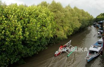 Pemulihan Mangrove Terus Digalakkan Hingga 2024