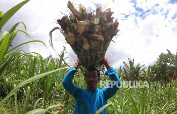 'Dasar Pembelian Gula Petani Oleh Importir Harus Jelas'