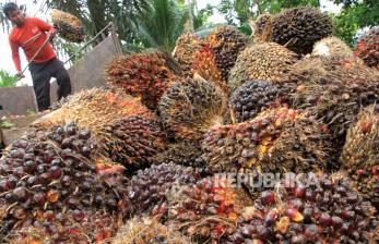 Tiga Industri Sawit Kerja Sama Pemberdayaan Petani Swadaya