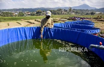 Budi Daya Ikan, Ini Perkiraan Laba Petani Milenial di Jabar
