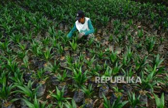 Industri Sawit Minta Kepastian Revisi Pungutan Ekspor