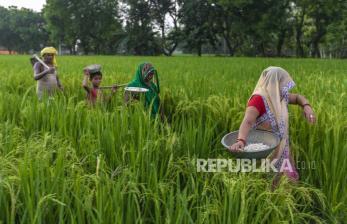 Petani India Protes UU Pertanian Baru tak Jamin Harga Panen