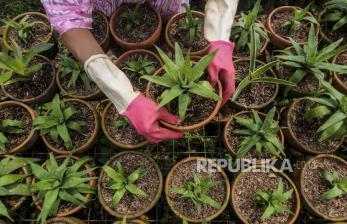 Omzet Tanaman Hias Kabupaten Bogor Rp 300 Juta per Hari