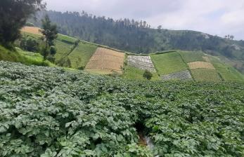 Lebaran, Boyolali Siap Amankan Pasokan Sayuran
