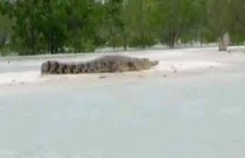 Arung Sungai Penuh Buaya di Pantai Ujung Aceh