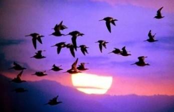 Rahasia Burung Bisa Terbang, Sains Jelaskan Ayat Alquran