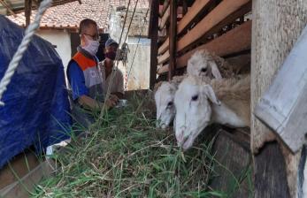 Peternak Desa Berdaya Panen Penggemukan Kambing