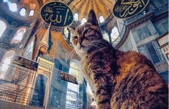 Perlakuan Spesial untuk Gli, Kucing Penghuni Hagia Sophia