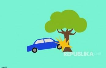 Pohon Randu Tumbang di Randudongkal Timpa Mobil, 4 Meninggal
