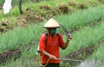 Cara Meracik Pestisida Organik Berbahan Rempah